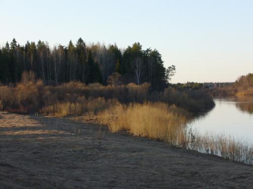 Вот там, где перед лесом в Молому впадает речушка, любят присаживаться утки