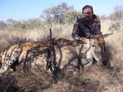 Обычный серый равнинный намибийский иланд (антилопа канна). Оказался тоже со сломанным рогом. Но это был последний шанс, — завтра уезжаем на побережье. Так торопился, что заработал себе очередной «шрам идиота» прицелом.