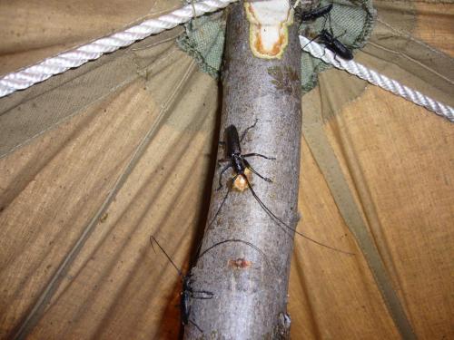 Неожиданные гости в палатке наутро