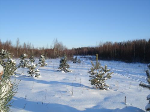 Ждем лосей, Тверская область