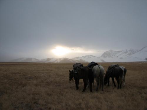 Коняжки пасутся, чем Бог послал...
