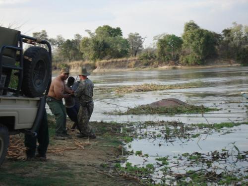 """""""Вот была потом работа, из болота тащить бегемота...""""!"""