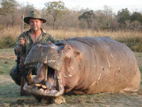 Эх, как нам не хватало этого мяса для привад в Рунгве! Но бегемот добыт только в Селусе, где получше с водой.