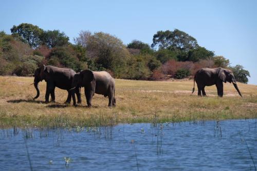 Этим слоняткам повезло, у них маленькие зубки