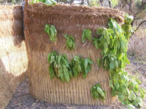 Повсеместно применяемый забор, сплетенный из сухой травы. Используется начиная от приусадебных изгородей до переносной засидки на льва