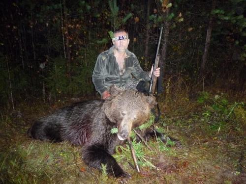 Медведь в Лузском районе, за Лальском