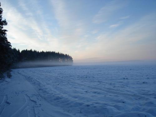 Красота зимнего морозного утра перед первым загоном, Белоруссия