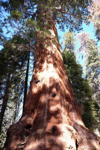 Вид гигантских секвоий завораживает