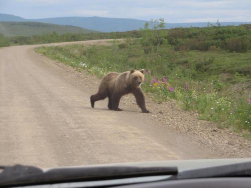 Уже на подъезде к самостийной помойке медведи тусуются косяками