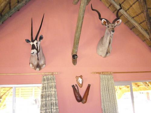 Стену украшают типичные намибийские трофеи: орикс и куду
