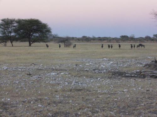 Африка — это обилие животных