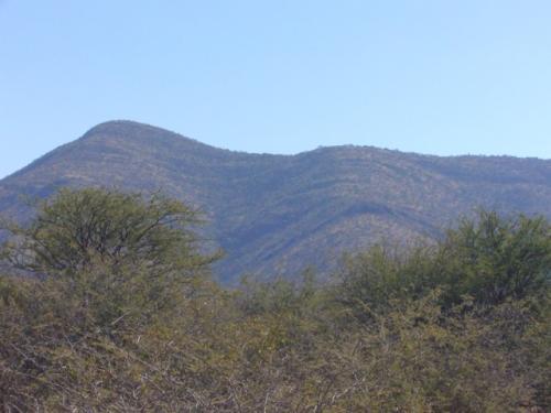 На равнине есть и подобие гор или холмов, какие-то из животных предпочитают жить там