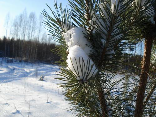 Хорошо зимой!