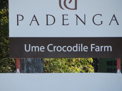 Аэродром расположен при крокодиловой ферме