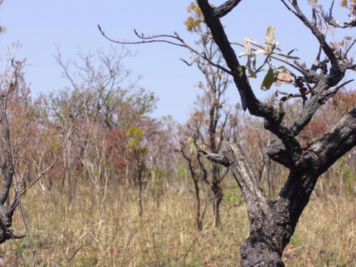 Вы видите антилопу? А она там есть!
